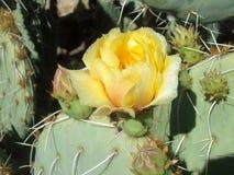 el cactus subió Imagenes de archivo