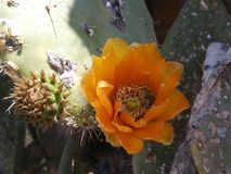 El cactus y la abeja Imagen de archivo libre de regalías