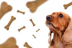 El caer de la comida de perro Imagen de archivo