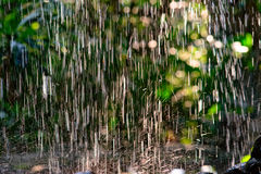 El caer de la lluvia Imágenes de archivo libres de regalías