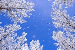 El caer de la nieve Imágenes de archivo libres de regalías