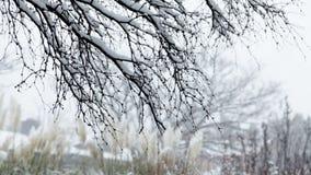 El caer de la nieve almacen de metraje de vídeo