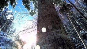 El caer de la nieve de los árboles de la nieve del bosque de maderas de los árboles del invierno de la nieve metrajes