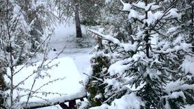 El caer de la nieve y abeto cubierto el día de invierno Cámara lenta almacen de metraje de vídeo