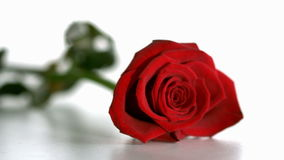 El caer de la rosa del rojo almacen de video
