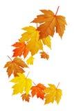 El caer de las hojas Foto de archivo libre de regalías