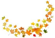 El caer de las hojas de arce Foto de archivo libre de regalías