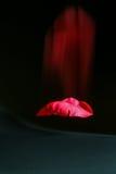 El caer del pétalo de Rose Fotografía de archivo libre de regalías