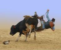El caer del vaquero de una Bull Imagenes de archivo