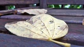 El caer se va con descensos del agua de lluvia después de una precipitación de la tormenta y de la luz en la noche Fotos de archivo libres de regalías