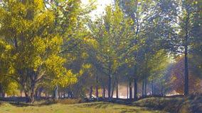 El caer se va en bosque del otoño en el día soleado tranquilo metrajes