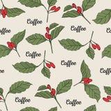 El café ramifica inconsútil Fotos de archivo libres de regalías