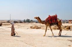 EL CAIRO - CIRCA JUNIO DE 2014: Cameleer con el camello Fotos de archivo