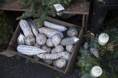 El calabacín y los conos pintados en plata en una caja de madera para la venta Imagen de archivo libre de regalías