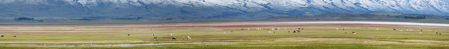 El Calafate, Glaciers National Park, Patagonia, Argentina, South America Stock Image