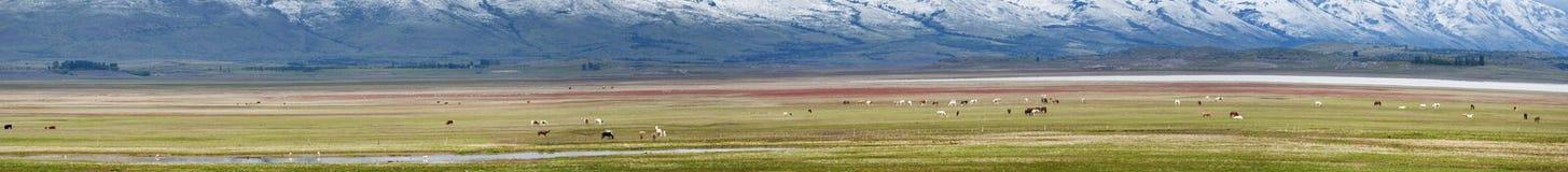 El Calafate, lodowa park narodowy, Patagonia, Argentyna, Ameryka Południowa obraz stock