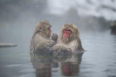 El calentarse en aguas termales Foto de archivo libre de regalías
