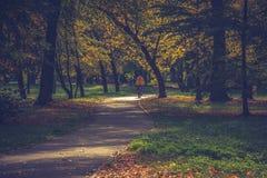 El callejón en el parque Imagen de archivo