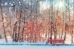 El callejón en el parque heló el banco rojo Fotos de archivo