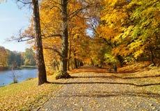 El callejón en la sombra de los árboles del otoño Imagen de archivo