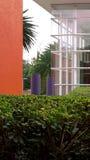 El callejón en un partk tropical Fotografía de archivo libre de regalías