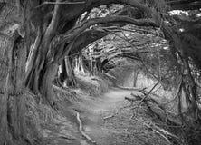 El callejón hueco Fotos de archivo