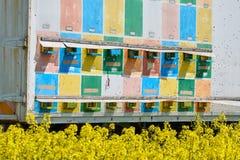 El camión con la abeja encorcha en un campo de la violación Imagen de archivo