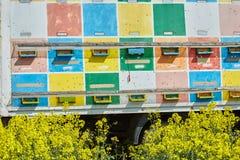 El camión con la abeja encorcha en un campo de la violación Foto de archivo