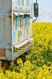 El camión con la abeja encorcha en un campo de la violación Fotos de archivo libres de regalías