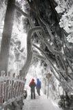 El caminante de la nieve imágenes de archivo libres de regalías