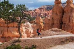El caminante visita el parque nacional del barranco de Bryce en Utah, los E.E.U.U. imagenes de archivo