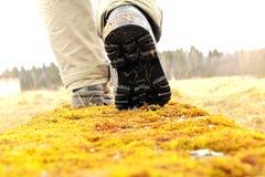 El caminar abajo de Moss Path Fotografía de archivo