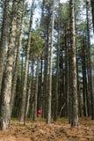 El caminar adolescente en el bosque Fotos de archivo libres de regalías