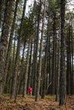 El caminar adolescente en el bosque Foto de archivo