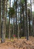 El caminar adolescente en el bosque Imágenes de archivo libres de regalías