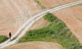 El caminar adolescente en un campo. Foto de archivo libre de regalías