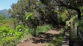 El caminar de Madeira Foto de archivo