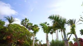 El caminar debajo de los árboles de Plam en Tenerife almacen de metraje de vídeo