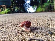 El caminar del caracol Imágenes de archivo libres de regalías