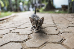 El caminar del gato del bebé Imagenes de archivo