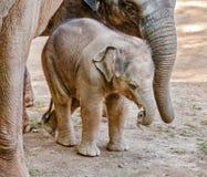 El caminar del jumbo del bebé imagenes de archivo