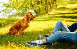 El caminar del perrito Fotografía de archivo libre de regalías