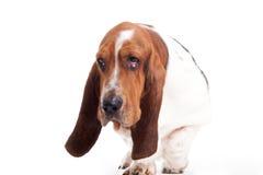 El caminar del perrito de silencio Fotografía de archivo libre de regalías