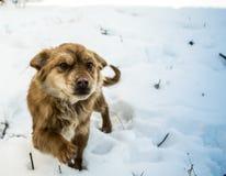 El caminar disimulado del perro fotos de archivo