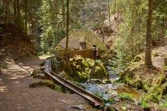 El caminar en el barranco de Ravena del r?o en el bosque negro en Alemania foto de archivo