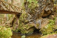 El caminar en el barranco de Ravena del r?o en el bosque negro en Alemania fotos de archivo