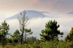 El caminar en bosque Fotografía de archivo libre de regalías
