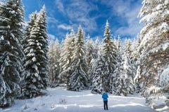 El caminar en bosque del invierno de la nieve imágenes de archivo libres de regalías
