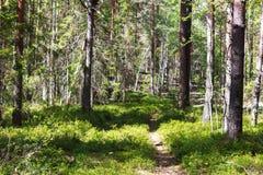 El caminar en el bosque Desierto del bosque Trayectoria que camina en el bosque fotografía de archivo