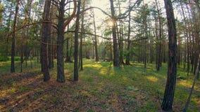 El caminar en el bosque metrajes